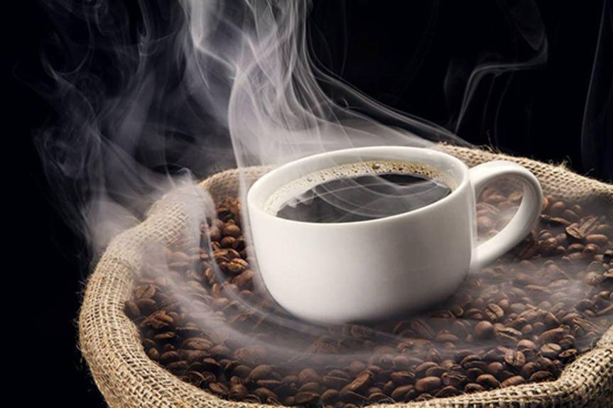 kopi luwak cup