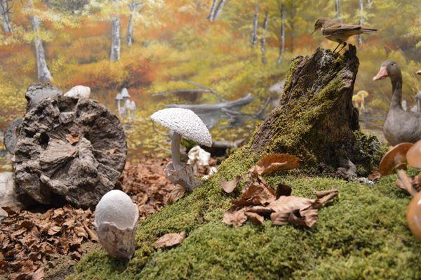 diorama-mushroom11