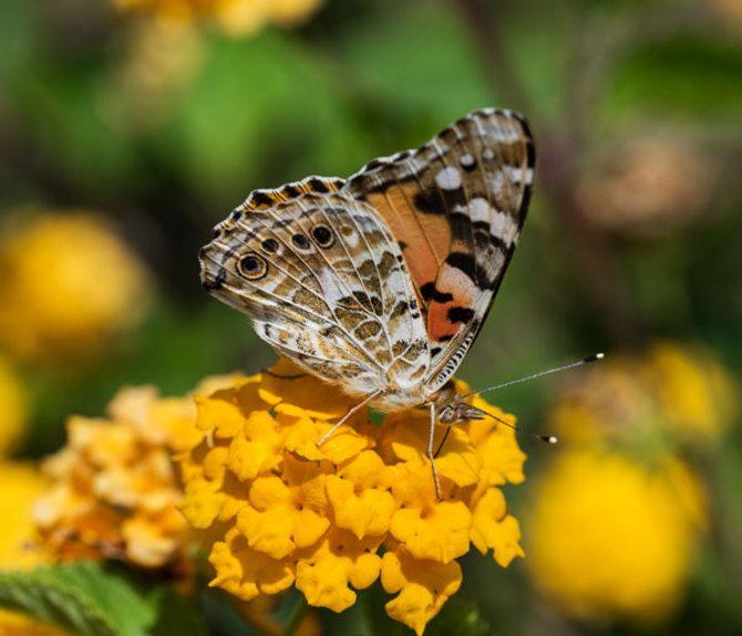 Butterfly_2014_06_15