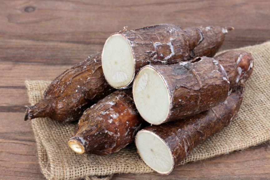 cassava_189565832