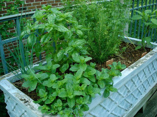 herb-mixed-pot