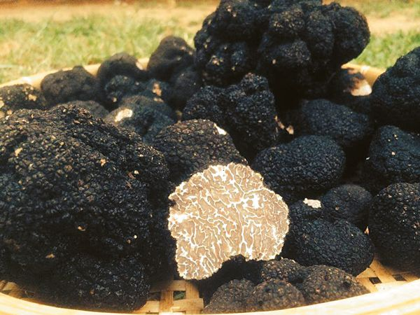 μανιτάρι-τρούφα