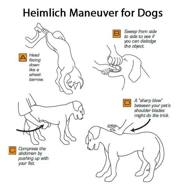 Dog-Heimlich-Maneuver-steps