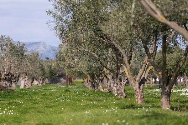 Margi_Farm-Nikos_Karanikolas-8018