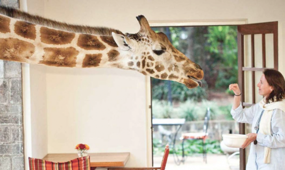 gallery-1508537027-delish-giraffe-manor