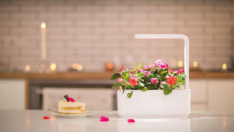Smart-Garden_Flowers