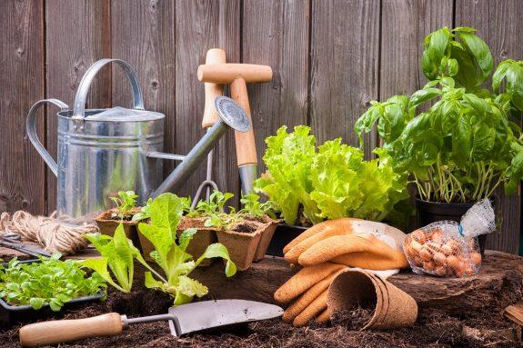 Κηπουρική στο σπίτι εύκολα και οικονομικά - www.olivemagazine.gr